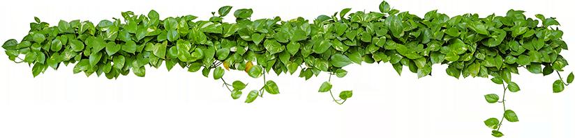 Bladeren voor over contact
