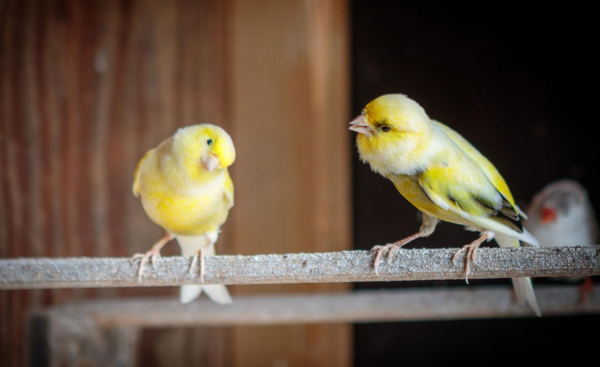 Zorgboerderij Ravensbosch Hulsberg vogels