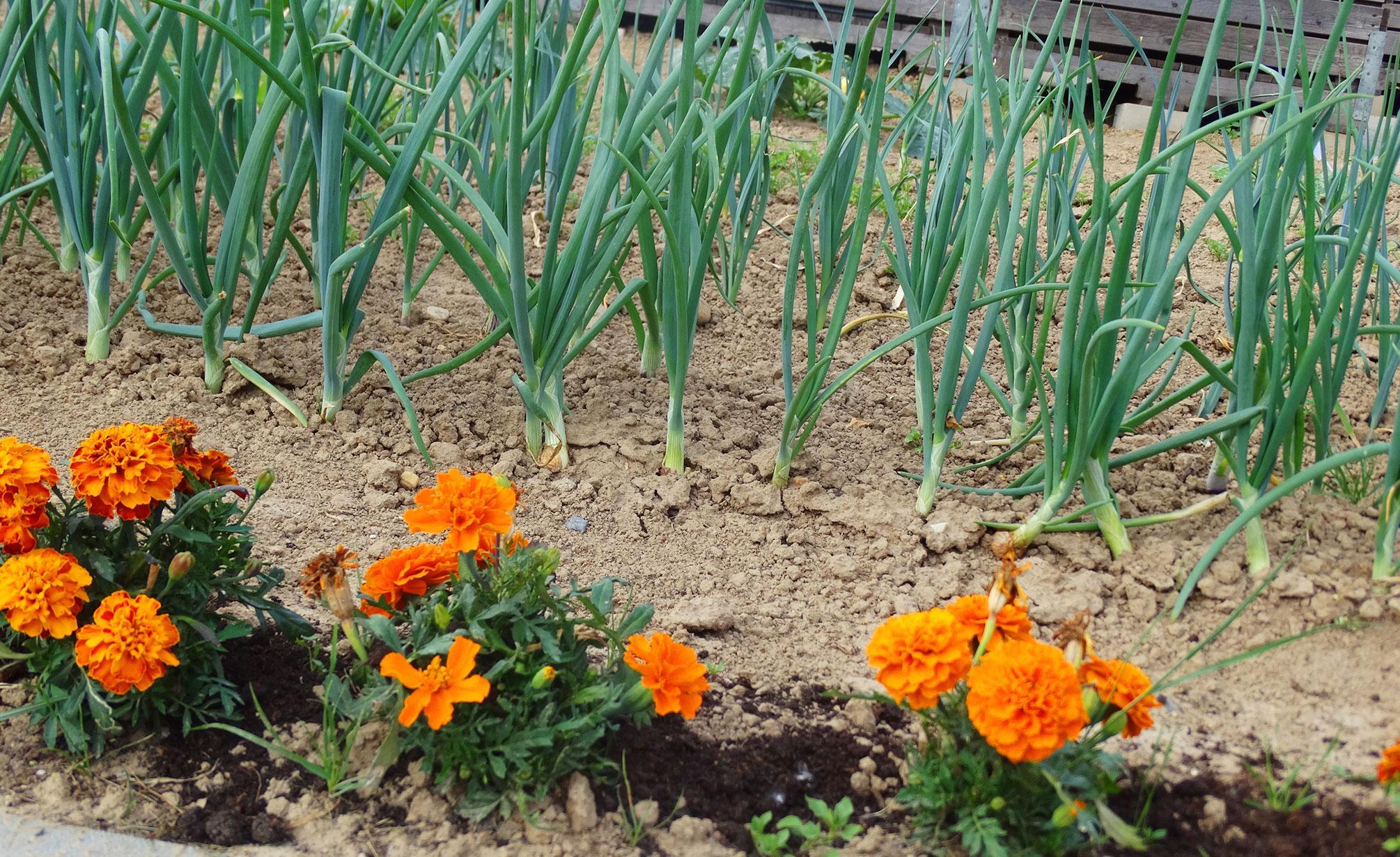 Zorgboerderij Ravensbosch Hulsberg bloemen en prei